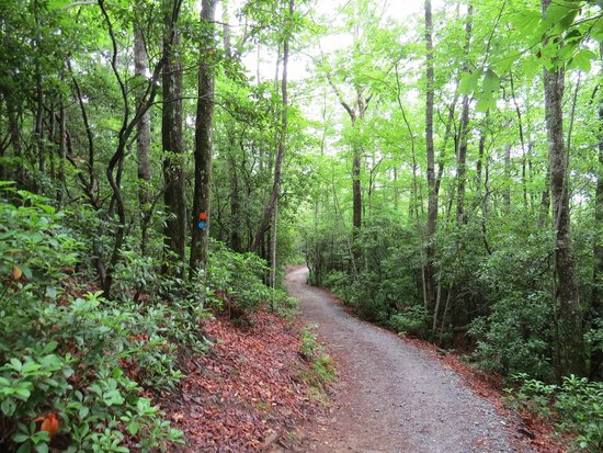 Gorges State Park: Beautiful Rainbow Trail