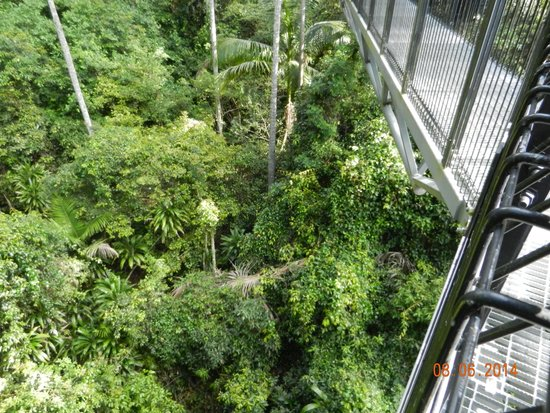 Tamborine Rainforest Skywalk: Skywalk