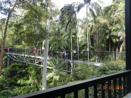 Tamborine Rainforest Skywalk: Skywalk