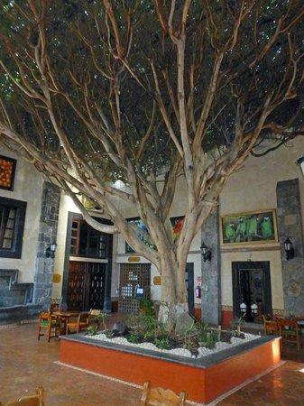 Mision San Gil: Baum im Innenhof
