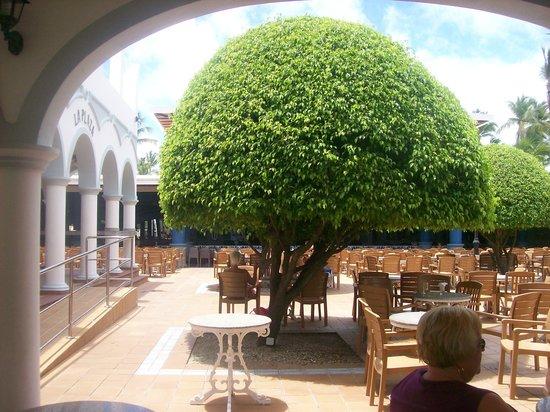 ClubHotel Riu Bambu: Outside Lobby