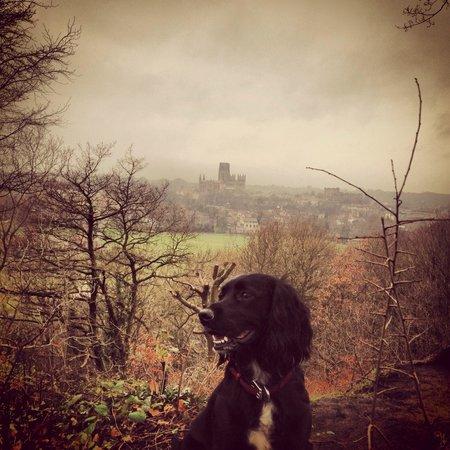 Cathédrale de Durham : Lucy Appleby
