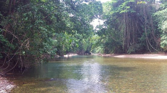 Cave Tubing with Vitalino Reyes: River view