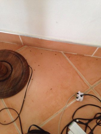 Royal Decameron Club Caribbean: Dead ants on the floor that was never cleaned up