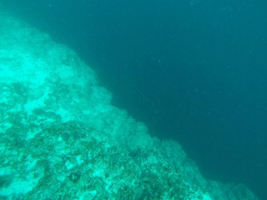 The Great Blue Hole at Lighthouse Reef: BlueHole
