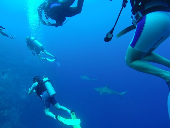 The Great Blue Hole at Lighthouse Reef: Sharks!