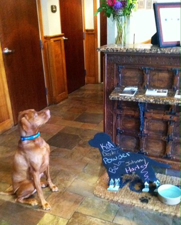 The Hotel Telluride: May please have a treat?
