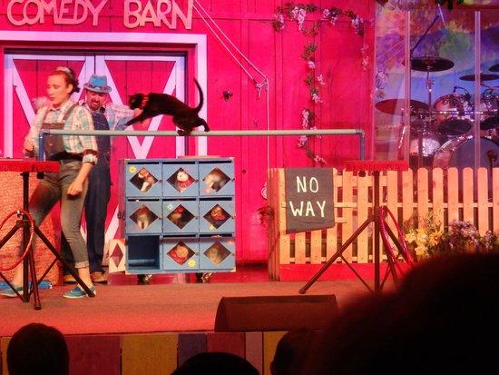 Comedy Barn: Cats doing tricks