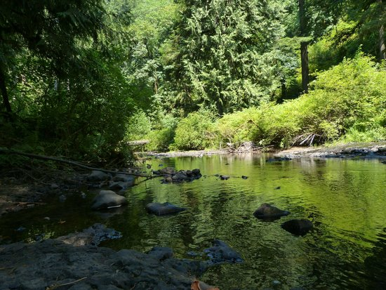 Silver Falls State Park: Lush forest, Great trails