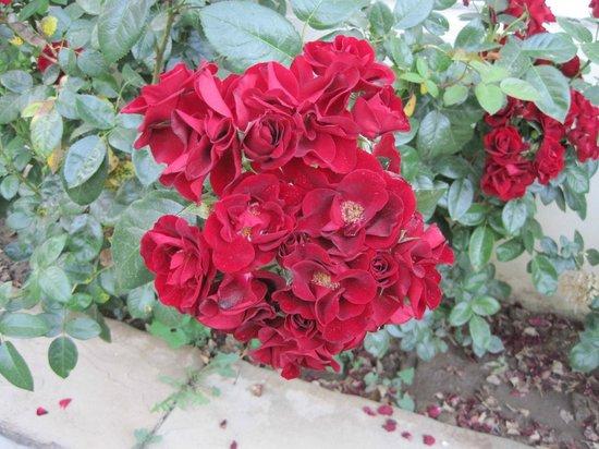 Hotel Villa Stanley : Beautiful flowers on site