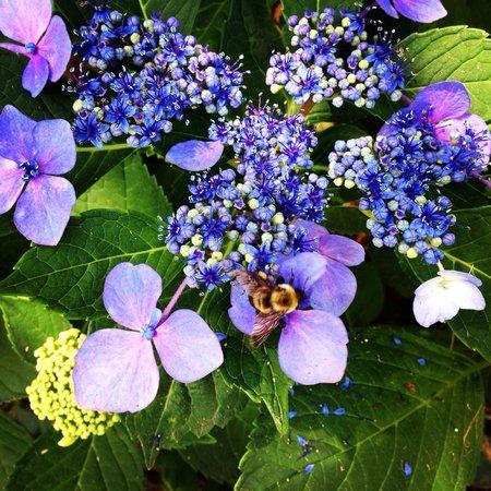 Callaway Gardens Resort : Bumble Bee