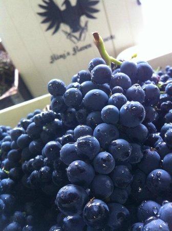 King's Raven Winery - Pinot Noir - Marechal Foch - Leon Millot - Pinot Gris - Chardonnay - Riesl