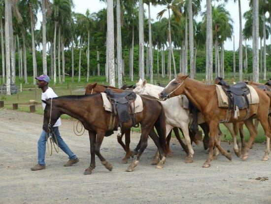Luxury Bahia Principe Esmeralda Don Pablo Collection: Horse Riding on Meag Truck trip