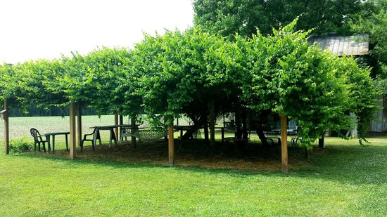 Big Mill Bed and Breakfast: Romantic old grape arbor is lit at night with twinkling lights & two hammocks