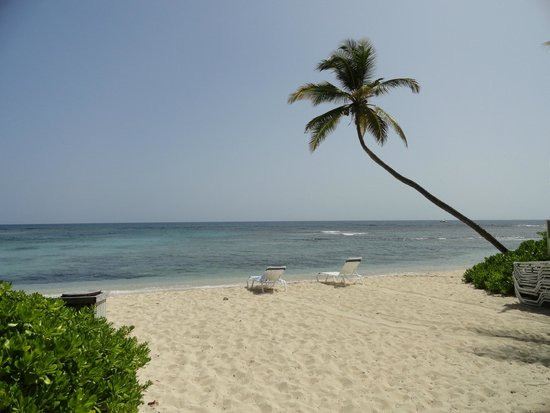 The Palms at Pelican Cove: The beach directly in front of the dining area.