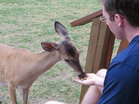 Canyon Lakeview Resort: Food is provided daily for feeding the deer!