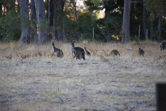 Riverwood Retreat Bed & Breakfast : Wildlife on the property