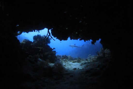Stuart Cove's Dive Bahamas: reef shark at  Hole in the Head