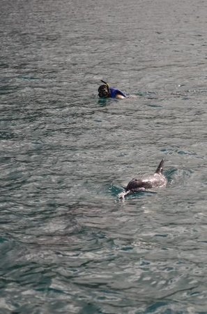 Dolphin Encounter: My husband and his new wild pal.