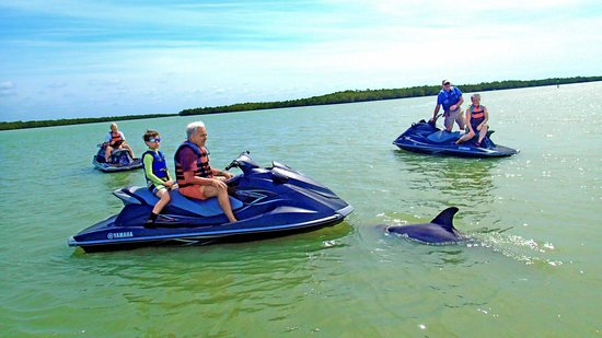 Marriott's Crystal Shores: Mingling with Dolphins on WaveRunner tour