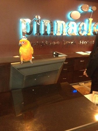 Pinnacle Lumpinee Park Hotel: Not one of the regular staff...