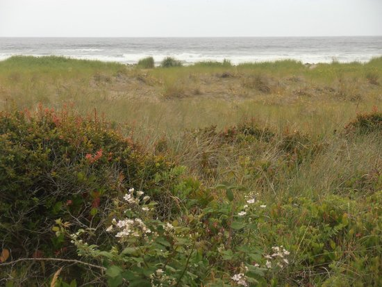 Turnaround at Seaside: Out to the ocean over the grasslands