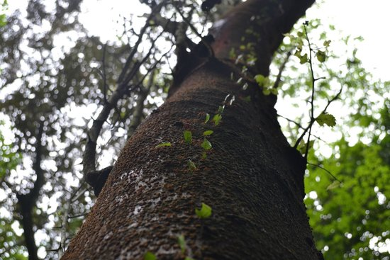 Metropolitan National Park: leaf cutter ants!