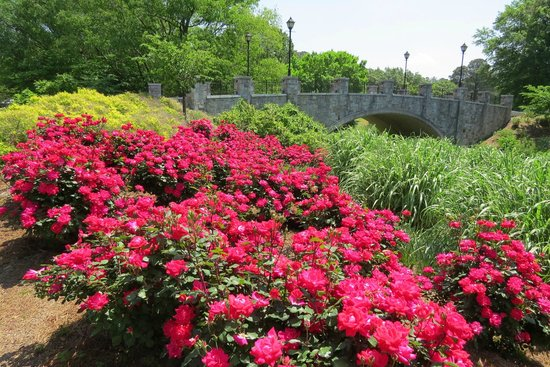 Norfolk Botanical Garden : rose garden