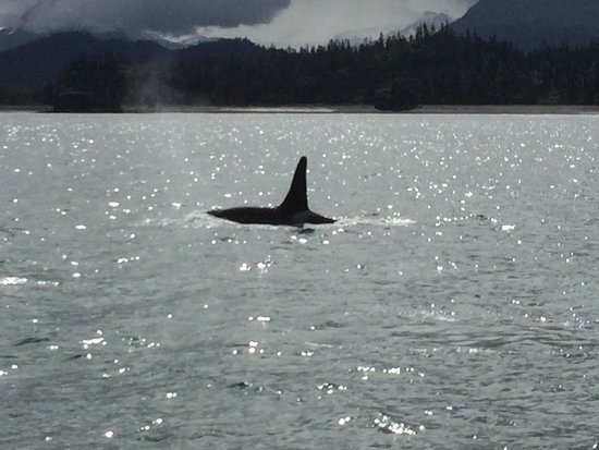 We had a great day with Rainbow tours going to Seldonia. Capt Monica and Ginger took the time to