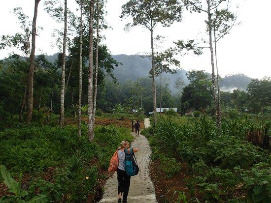 Jungle Lodge : Walking to accommodation
