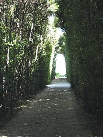 Aventine Hill: With the door open, it's a hedgerow
