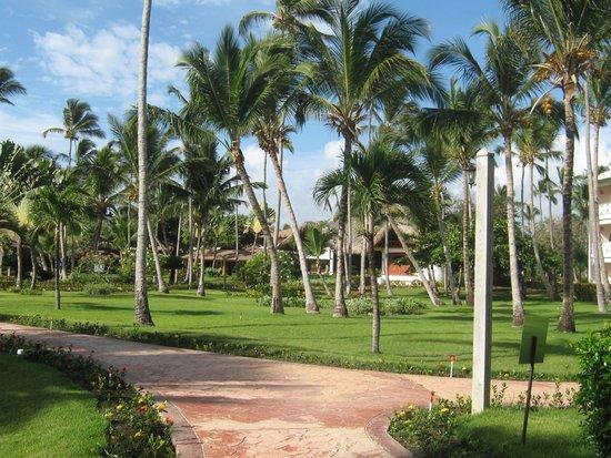 VIK Hotel Arena Blanca: jardin del hotel