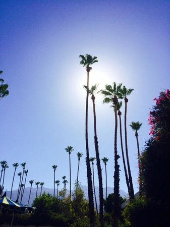 Parker Palm Springs: Lovely grounds with lots of nooks & crannies to relax in