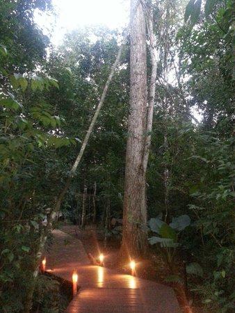 Tierra Guarani Lodge: gigantes arboles