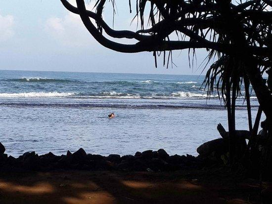 Barberyn Reef Ayurveda Resort: Beach Views
