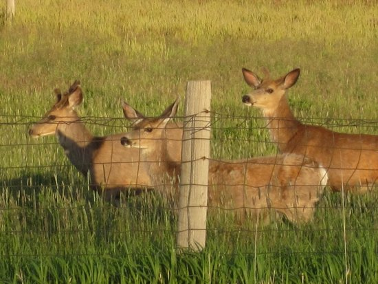 Yellowstone Valley Inn: Our daily visitors