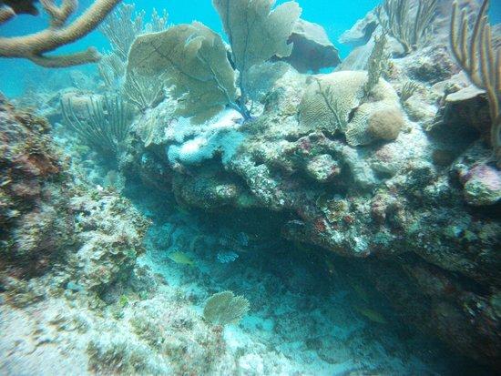 Sea Pro Divers : Reef