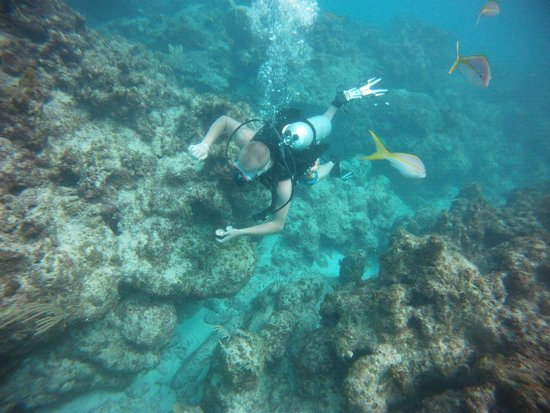 Sea Pro Divers : Son exploring the reef