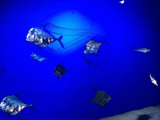 Sea Life Melbourne Aquarium: Beautiful sea 'dance'