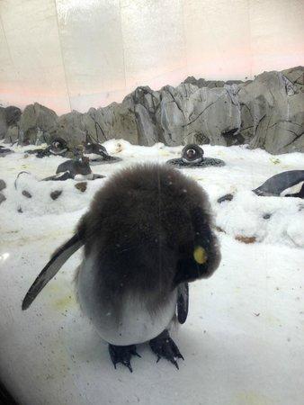 Sea Life Melbourne Aquarium: A sleeping penguin