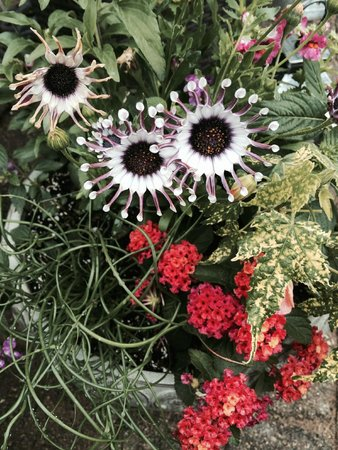 A G Thomson House Bed and Breakfast: Beautiful, unusual flowers