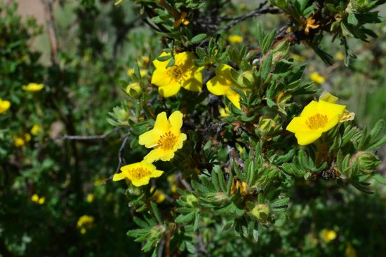 Florissant Fossil Beds National Monument : Pretty wildflowers along the trail