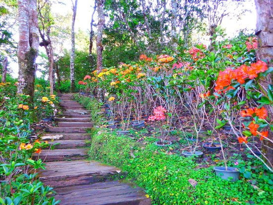 Doi Chang Mub Arboretum