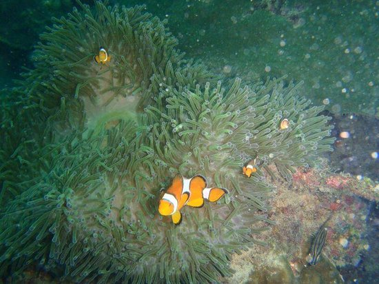 Love Diving Phuket: Finding nemo