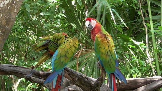 Xel-Ha: exotic birds