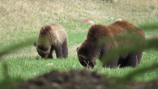 Jasper House Bungalows: Mum and cub.