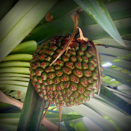 The Grand Mayan Nuevo Vallarta: local plant texture