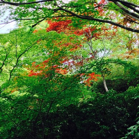 Okochi Sanso Garden: Thick foliage behind the house
