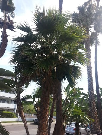 Comfort Inn & Suites Zoo SeaWorld Area: Palm trees ahhh!