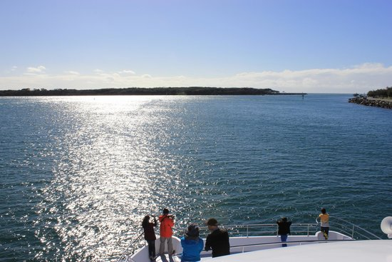 Sea World Whale Watch: View from highest deck.